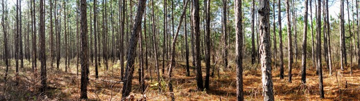 Lake Talquin State Forest.